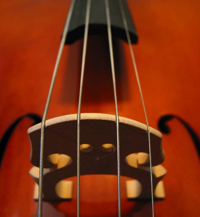 Close-up photo of cello bridge
